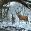 『心と体と』ネタバレ考察・解説/二人が鹿の夢をみた理由